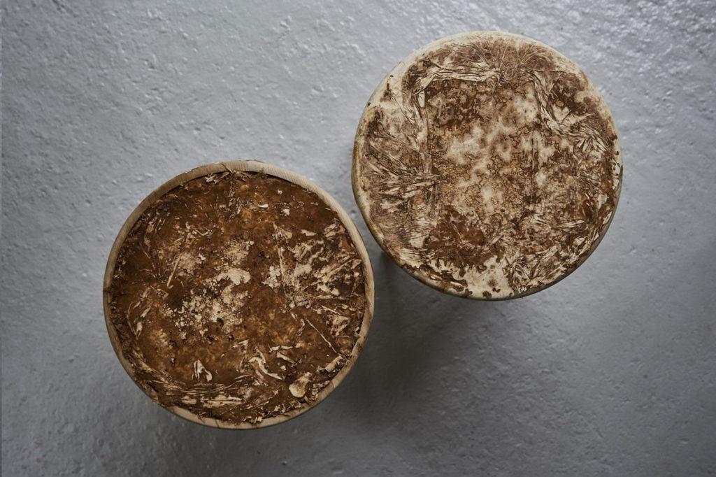Мебель из грибов