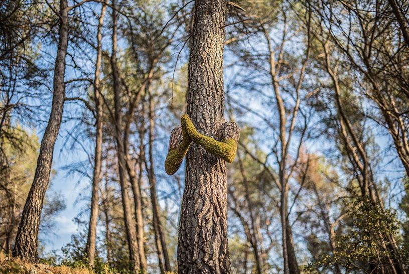 Фигуры из дерева
